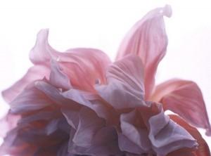 flower_brunoripoche