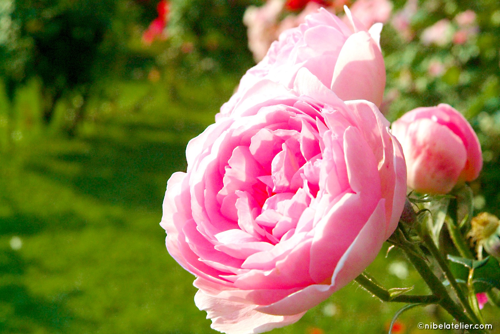 023-rosa-castello-quistini
