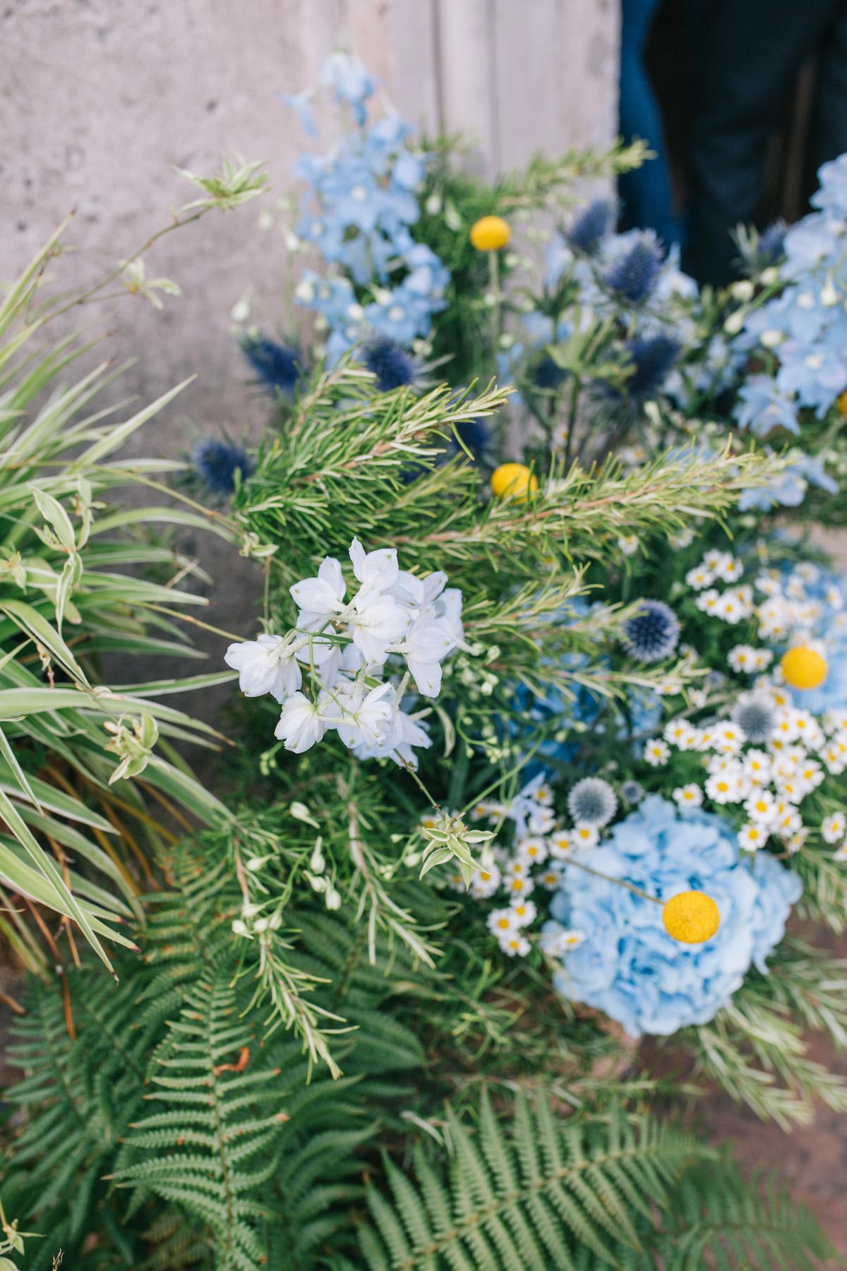 fiori-esitivi-corticelle-pieve